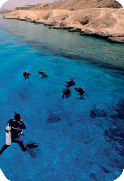Divers in the Red Sea