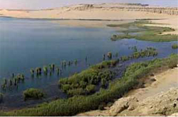 Lake Qarun National Park