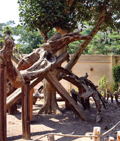 Virgin Mary's tree in Matariya